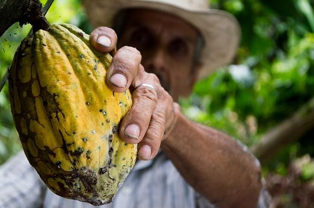 la polvere di cacao può aiutarti a perdere peso